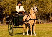 Driving Cart with Cobb Pony